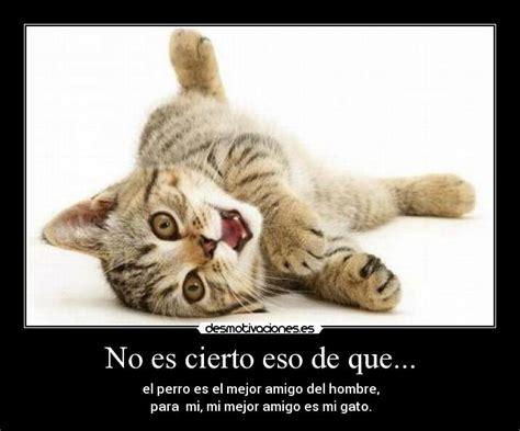 mi gato mi perro 1623957575 usuario lonely night desmotivaciones