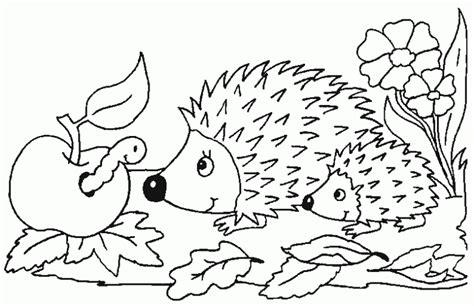 ausmalbilder tiere igel  malvorlage tiere ausmalbilder