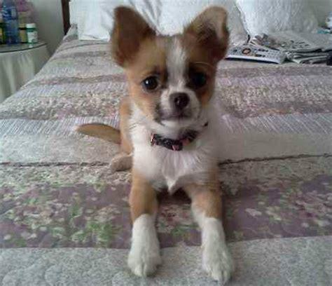 antifungal shoo for dogs care start carestart website