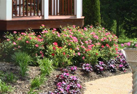 planting shrubs  perennials  cut flowers