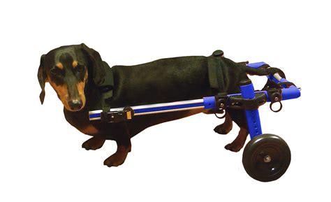wheels for dogs walkin wheels wheelchair ebay