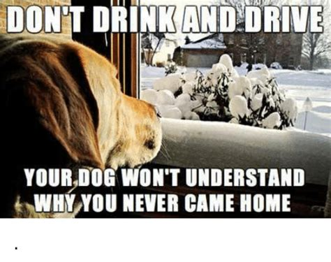Dog Driving Meme - funny drink and drive memes of 2017 on me me