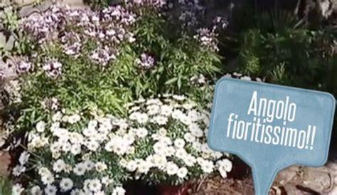 come creare un giardino fiorito aiuole fiorite per un giardino coloratissimo come