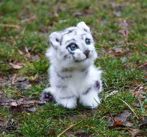Baby White Tiger baby tiger with blue www pixshark images