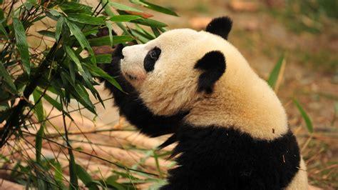imagenes de osos wallpaper osos wallpapers hd resoluciones taringa