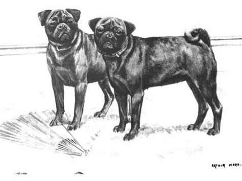 are pugs from china pugs from europe pugs from china history