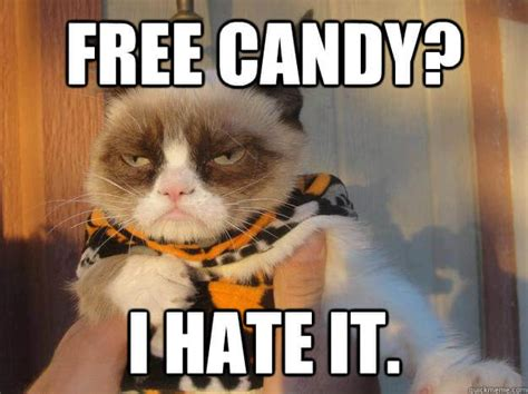 Halloween Cat Meme - funny fall memes for halloween enthusiasts paragon poll
