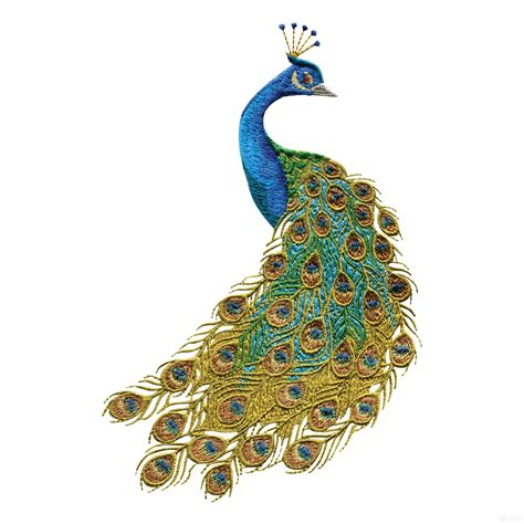 picture designs peacock white background images all white background
