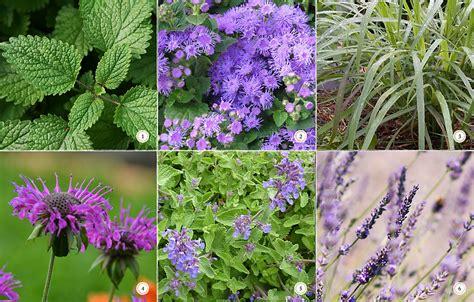 top 28 bug resistant plants best 25 insect repellent plants ideas on pinterest bug 17 best
