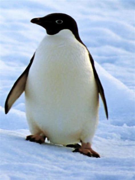 imagenes en blanco de animales lista animales en blanco y negro