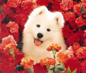 puppy with flowers flowers orange puppy image 437052 on favim