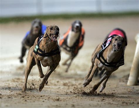 puppy racing casinos seek conscious uncoupling from us racing