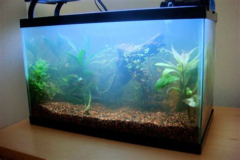 how to fix cloudy water in a new tank