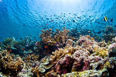 dive sipadan sipadan the mecca of diving wa and far away