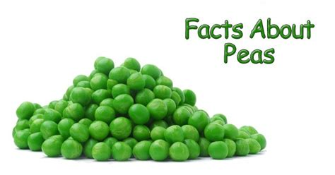 facts about green 25 interesting facts about peas the fact site
