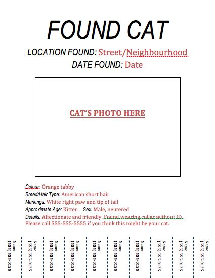blog graphic designer missing cat driverlayer search engine
