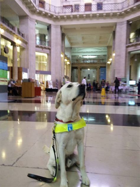 uri in dogs arnie the guide s guide to the museum national museum wales