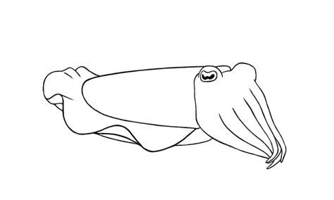 Cuttlefish Coloring Pages Cuttlefish Coloring Pages