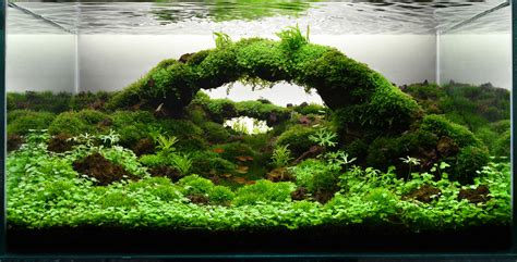 Aquascape Indonesia by Pd Aquatic Natura Indonesia Aqua Scape