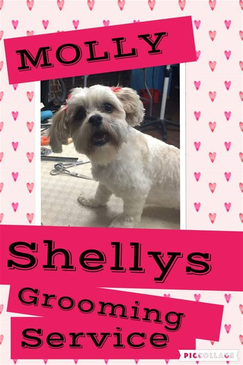 grooming service shelly s grooming service cat clipping grooming 14 rivergum pl hillside
