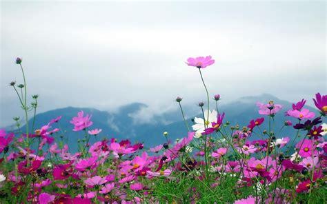 imagenes de paisajes rosas naturaleza paisajes flores plantas cos monta 241 as nubes