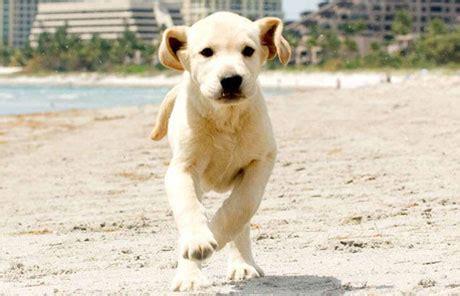 marley me the puppy years marley me the puppy years michael damian