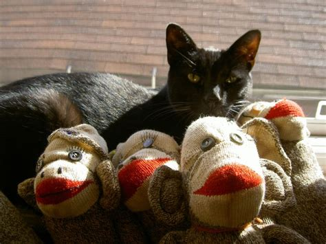 sock monkey cat 15 best images about sock monkeys 2016 on mondays opals and on my birthday