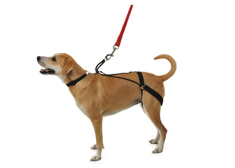 puppy harness the horgan harness a no pull harness