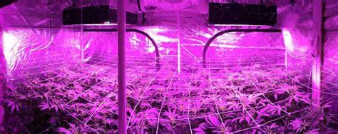 best led grow lights high times led grow lights review high times led vs hps review