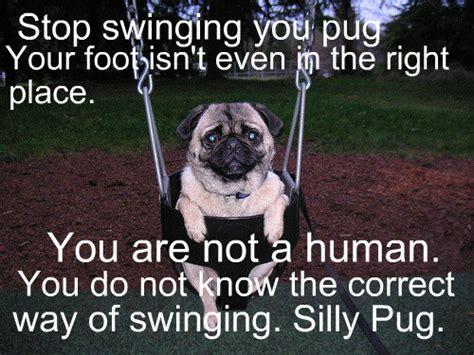are pugs retarded silly pug