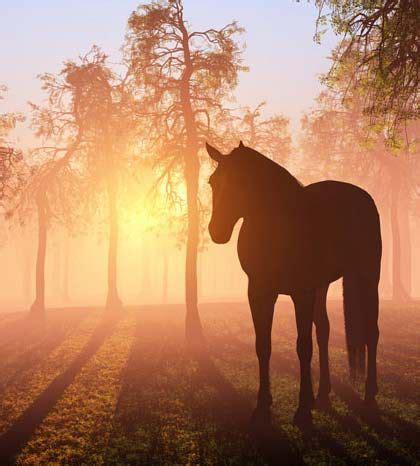 imagenes de paisajes y caballos caballos y paisajes http www elmundodelcaballo com