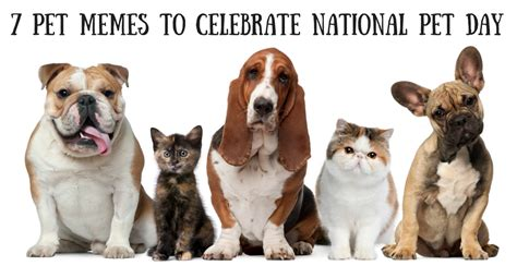 national puppy day meme 7 memes to help you celebrate national pet day