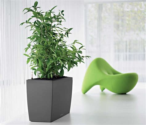 good office plants indoor office plants for good office environment office architect