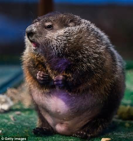 groundhog day meaning of shadow groundhog day deadlock punxsutawney phil sees his shadow