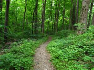 Hiking Trails 5 Of The Most Smoky Mountain Hiking Trails