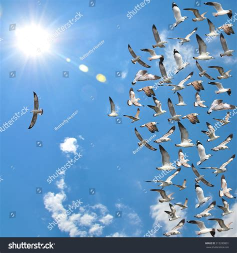 Kaos Special Flying flying seagull birds one individual stock photo