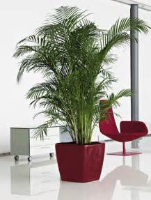Plants For The Office by Benefits Of Plants In The Office And Other Workplace