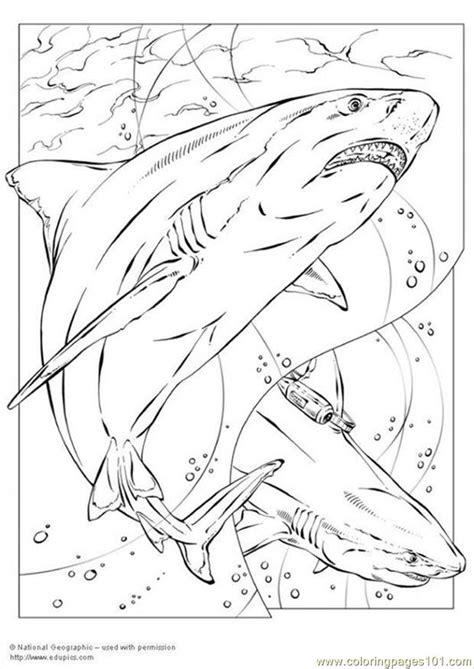 coloring pages bull shark p5735 fish gt shark free