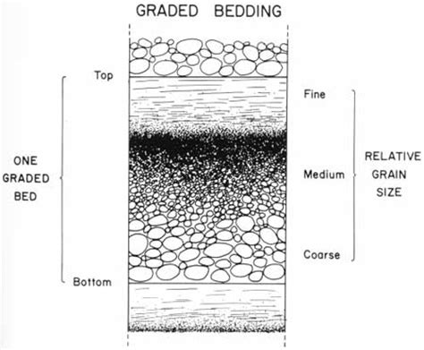 graded bedding graded bedding diagram www pixshark com images