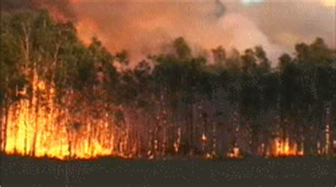 desastres naturales gif animado gifs animados desastres gifs animados de bosques gifs animados
