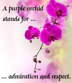 orchid color meaning orchid flower meaning and symbolism a really interesting