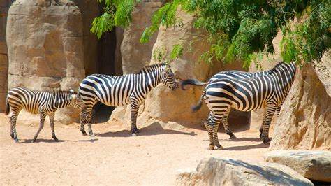 imagenes de animales del zoologico animal pictures view images of bioparc valencia zoo