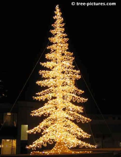 8 impressive christmas tree pictures