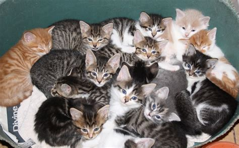 Litter Of Kitties by Two Litters Of Kittens Ready To Rumble Warminster