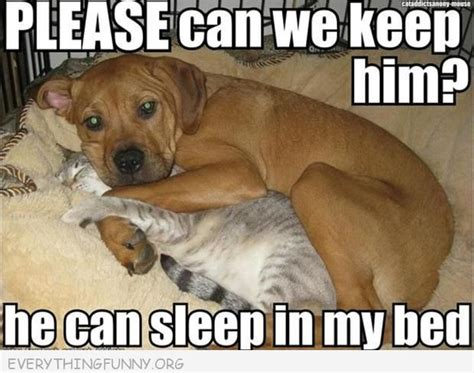 Cats And Dogs Can We Keep Him | 15 very best please dog pictures