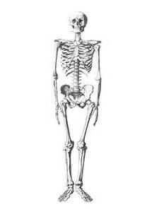 Diagram Of A Flower With Labels - gratis illustration skelet medicinsk knogle gratis