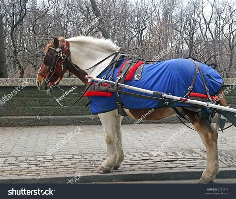 horse outside carriage horse outside of a park in the snow stock photo