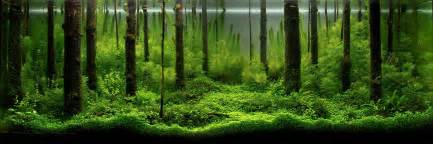 Forest Aquascape A Collection Of Beautiful Aquascapes Kristelvdakker