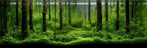 aquascape forest aquarium colorology how to create peaceful aquatic zen