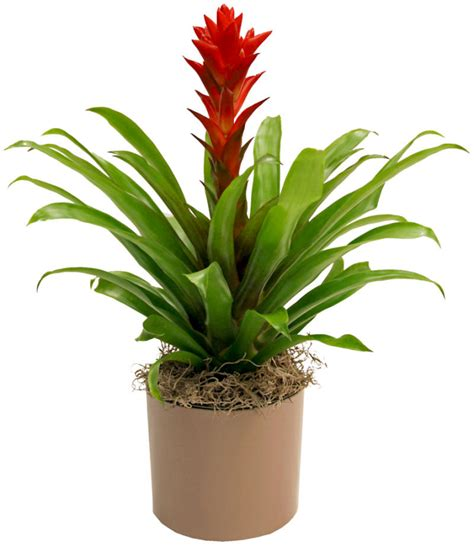 tropical plants wholesale midwest tropicals inc wholesale tropical plants kentia
